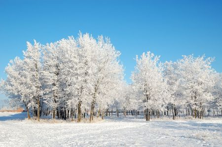 Trees in the park covered with snow Stock Photo - 7758512