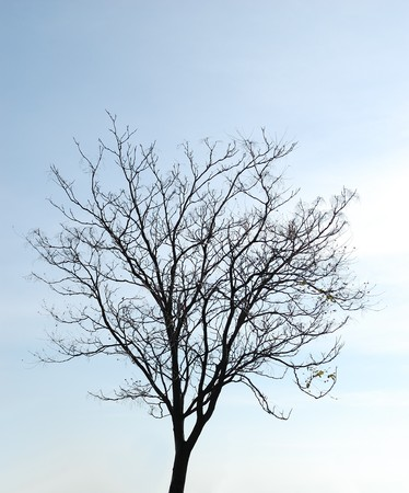 Bare tree on the sky background