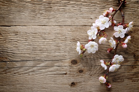 Spring blossom on wood background 스톡 콘텐츠
