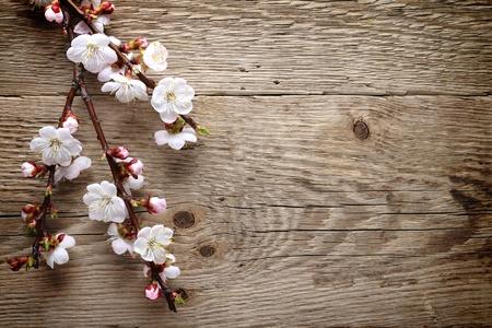 cerezos en flor: Primavera de flores sobre fondo de madera Foto de archivo
