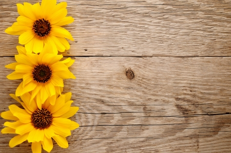 Ornamental sunflowers on wooden background photo