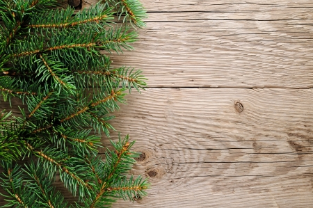 spruce tree: Spruce branches on wooden background
