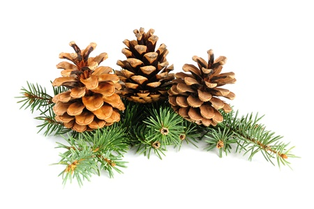 tree branch: Fir branches with cones isolated on white background Stock Photo