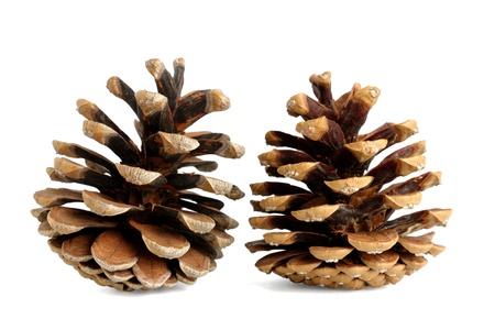 Les cônes de pin isolé sur fond blanc