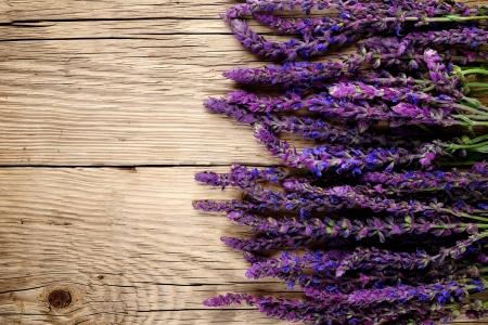 salvia: Salvia flowers on wooden background Stock Photo