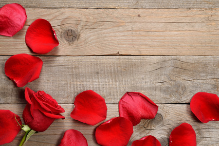 Red rose and petals on wooden background