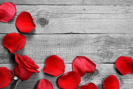 Rote Rose und Blütenblätter auf schwarzen und weißen Holzuntergrund