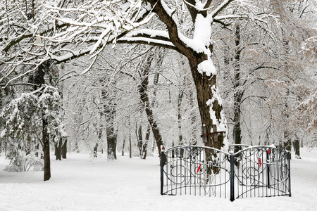 winter trees: White winter trees in snow