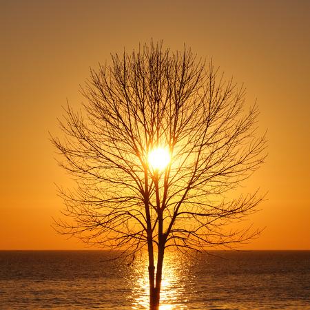 Silhouette von kahlen Baum bei Sonnenaufgang am Meer Standard-Bild