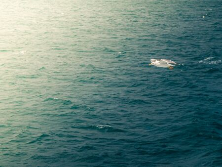 Seagull flying on blue clean water in the ocean. Top view aereal shot. 写真素材