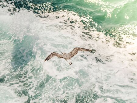 Seagull flying on blue clean water in the ocean. Top view aereal shot. Stock Photo