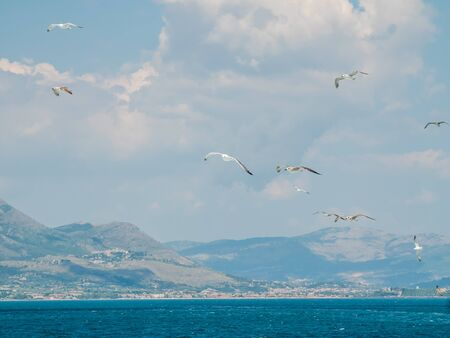 Flock of seagulls flying on blue clear sky water in the sea. Ponza Island in the background, Italy.