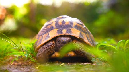 Tortoise in garden staring at camera 写真素材
