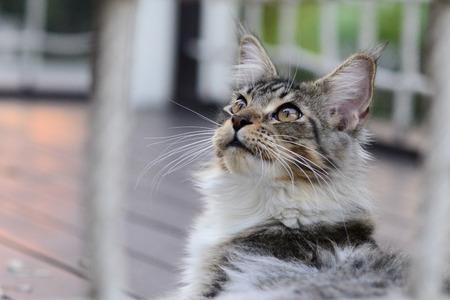 net: a beautiful cat in garden looking up behind a net
