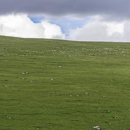 Grassland with blue sky