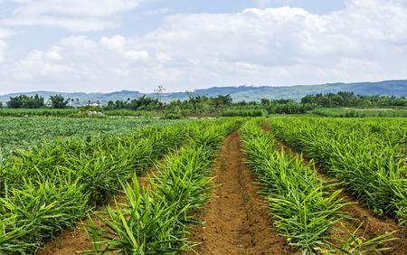 Landscape with agricultural land.