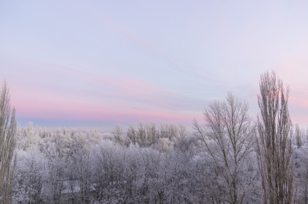 hoar: winter landscape trees covered with snow and hoar frost