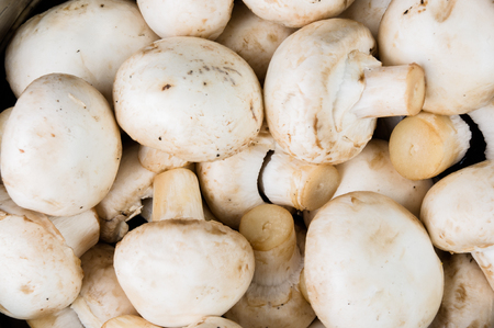 white washed: white washed mushrooms champignons, closeup, topview, macro
