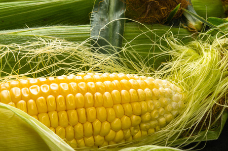 mazorcas de maíz fresco sobre el fondo negro, primer