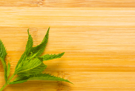 Fresh spearmint herb Mentha on a wooden background