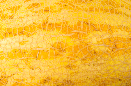 texture of the peel ripe juicy melon