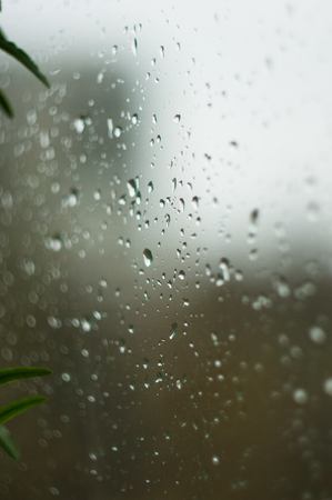 house plants and raindrops on the window glass, close up
