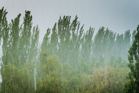 Landscape with green trees in a heavy summer rain Stock Photo