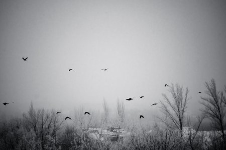 Winter urban landscape - snow storm, snow covered trees and black birds Stockfoto