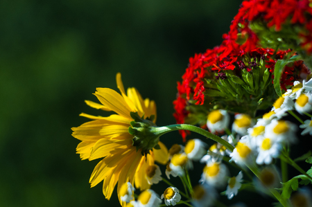 a colorful bouquet of bright spring flowers of various types, close-up Stockfoto - 116154425