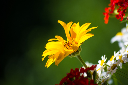 a colorful bouquet of bright spring flowers of various types, close-up 스톡 콘텐츠