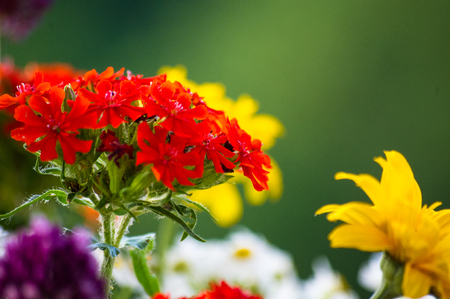 a colorful bouquet of bright spring flowers of various types, close-up 写真素材