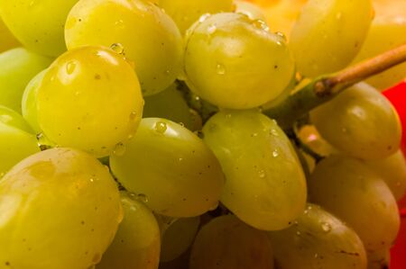 still life - a large brush of green grapes with water drops in a red ceramic plate on a wooden background