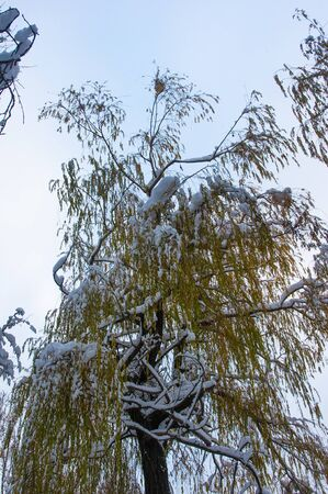 snow-covered branches and trees in the city park, winter landscape Imagens - 133180948