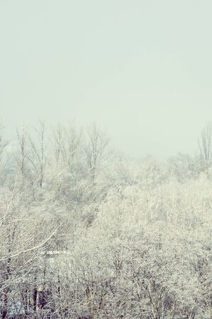Winter urban landscape - snow covered trees on foggy background Imagens - 133181603