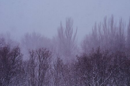 Winter urban landscape - snow covered trees on foggy background Imagens - 133181175