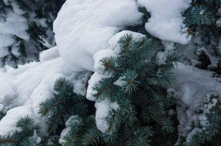 Green fluffy fir tree in the snow, Christmas wallpaper concept. Imagens - 133185969
