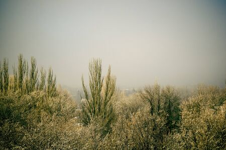 Winter urban landscape - snow covered trees on foggy background