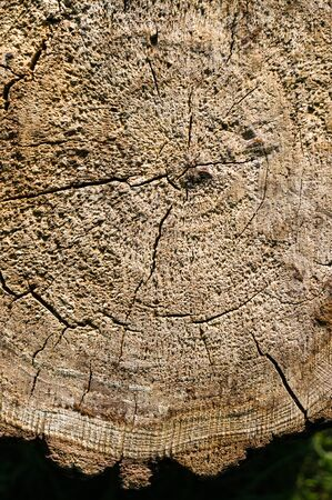 Vintage rough texture of old sawn tree trunk, close-up, macro photo