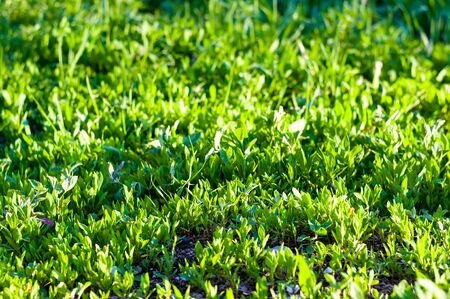 Spring or summer natural abstract background with grass Stok Fotoğraf