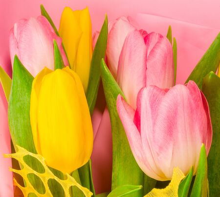 Background for a greeting card - a bouquet of fresh spring pink and yellow tulips 版權商用圖片