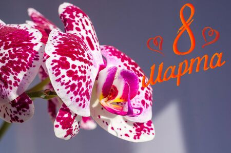 Holiday card - blooming bright multicolored orchids, holiday greetings, handwritten inscription with a brush 8 march, greeting lettering, russian text.
