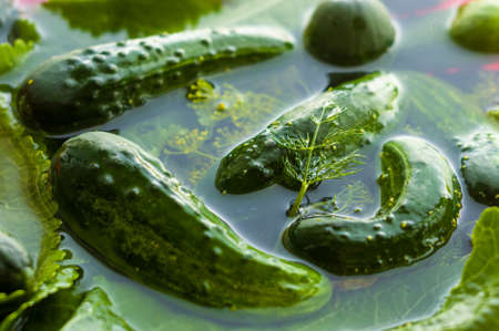 Fresh organic cucumbers and dill in water prepared for pickling, close-up