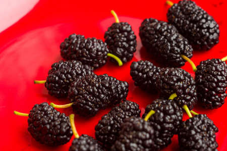 Ripe large black mulberries on a red plate, soft focus, close up. Banco de Imagens