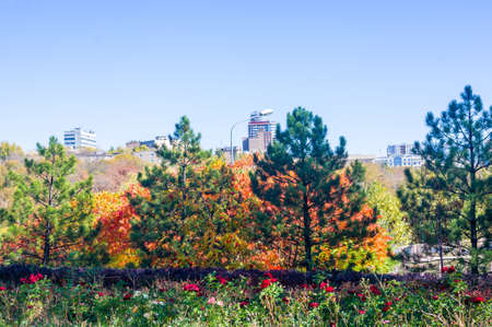 Autumn cityscape on a Sunny day - yellow autumn trees in the Park, colorful red and orange leaves, and bright sky with clouds Banco de Imagens