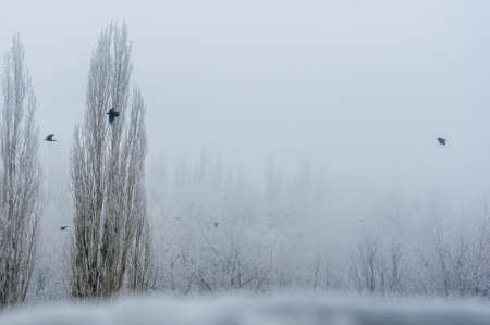 Winter urban landscape - snow storm, snow covered trees and black birds Imagens