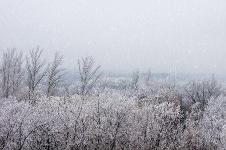 Winter urban landscape - snow covered trees on foggy background 版權商用圖片