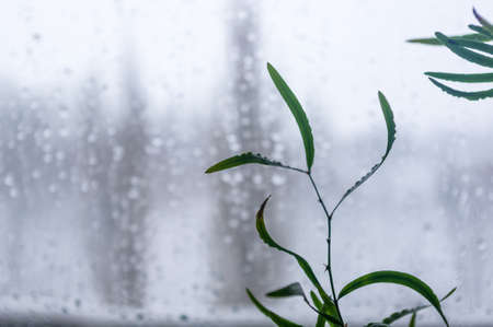Melting snow on the glass, drops of water condensation on the window, and transparent glass of the window in cold winter, winter landscape outside the window, close-up
