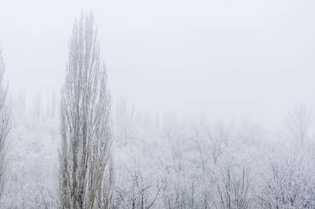 Winter frosty landscape - snow covered trees on foggy background, soft focus Imagens