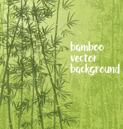 Bamboo forest background with copy space.
