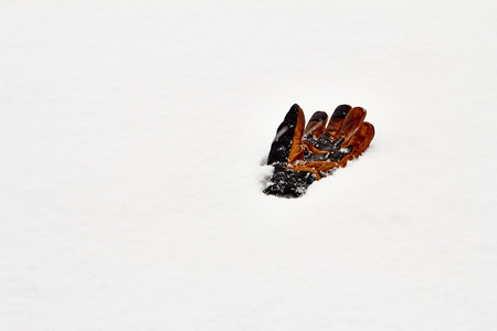 leather glove: leather glove laying in snow